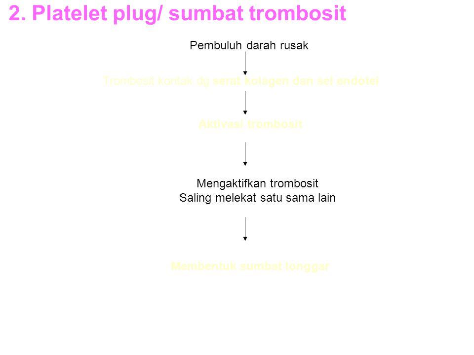2. Platelet plug/ sumbat trombosit