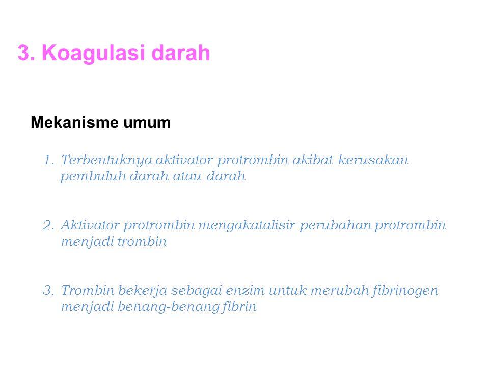 3. Koagulasi darah Mekanisme umum