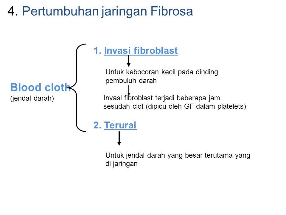 Pertumbuhan jaringan Fibrosa