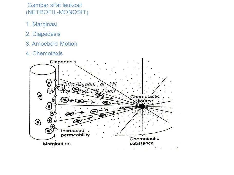 Gambar sifat leukosit (NETROFIL-MONOSIT)