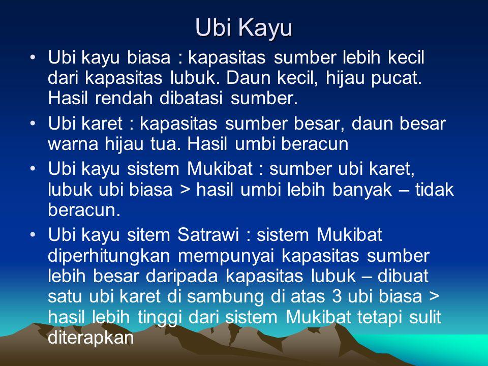 Ubi Kayu Ubi kayu biasa : kapasitas sumber lebih kecil dari kapasitas lubuk. Daun kecil, hijau pucat. Hasil rendah dibatasi sumber.