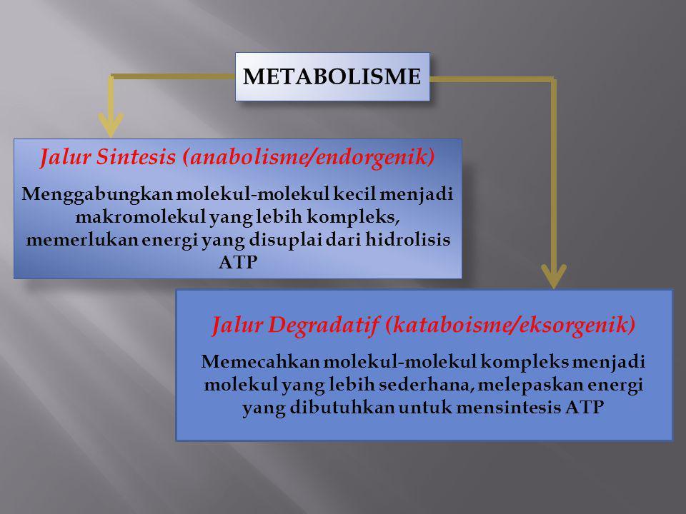 Jalur Sintesis (anabolisme/endorgenik)
