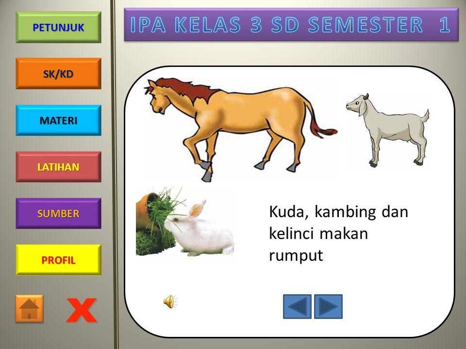 Kuda, kambing dan kelinci makan rumput