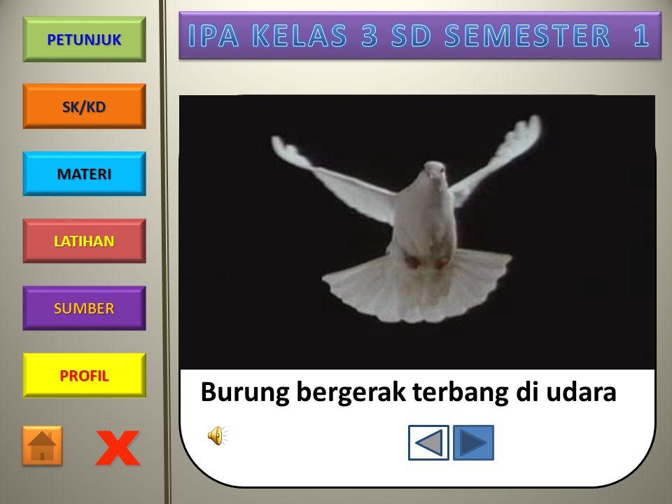 Burung bergerak terbang di udara