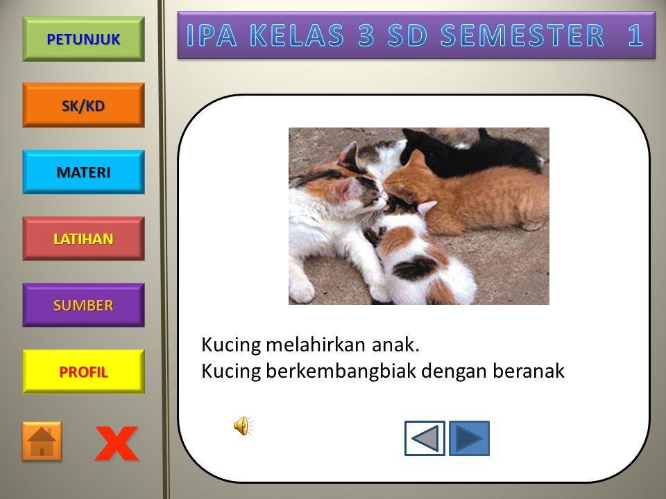 Kucing melahirkan anak.