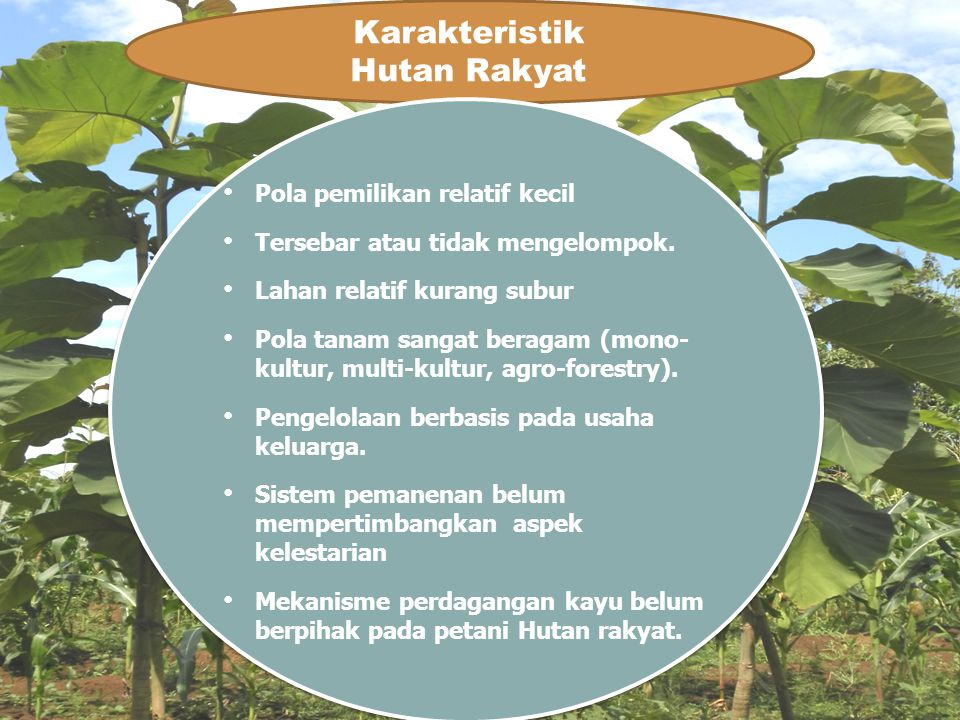 Karakteristik Hutan Rakyat Pola pemilikan relatif kecil
