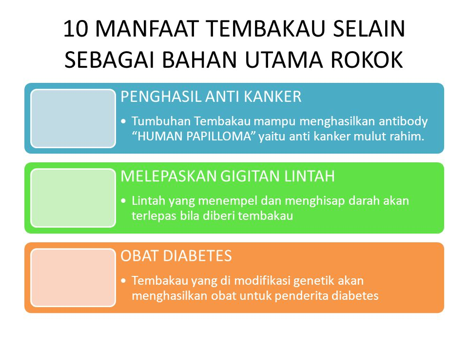 10 MANFAAT TEMBAKAU SELAIN SEBAGAI BAHAN UTAMA ROKOK