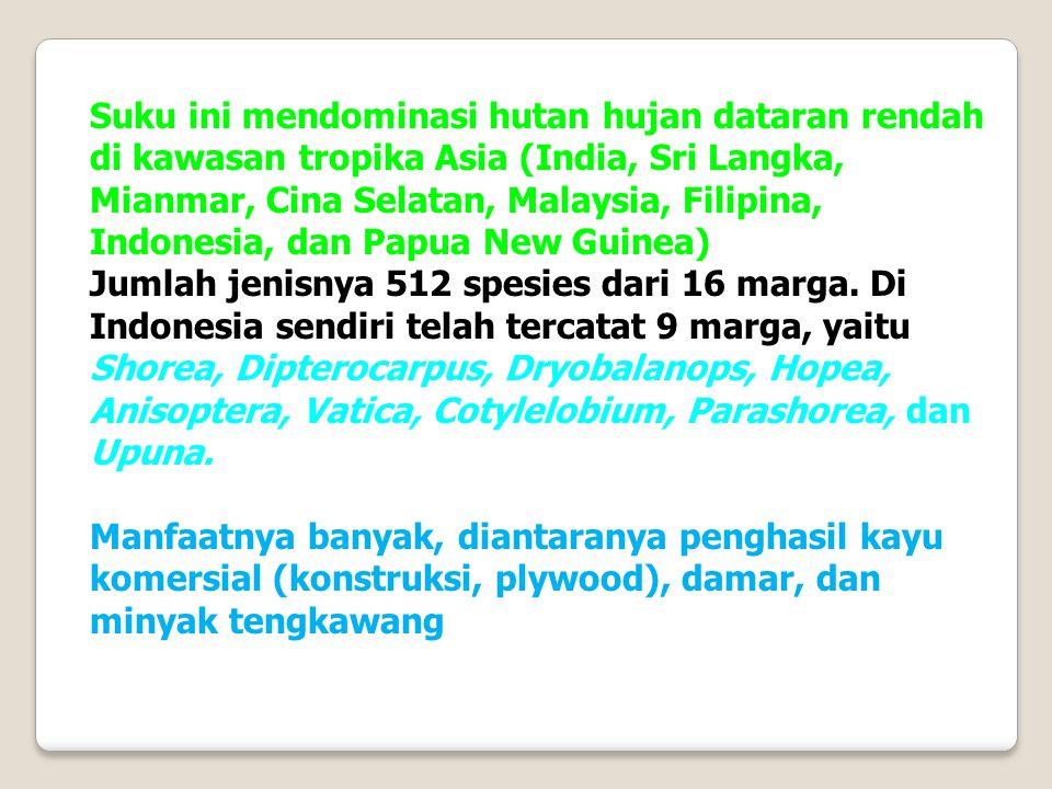 Suku ini mendominasi hutan hujan dataran rendah di kawasan tropika Asia (India, Sri Langka, Mianmar, Cina Selatan, Malaysia, Filipina, Indonesia, dan Papua New Guinea)