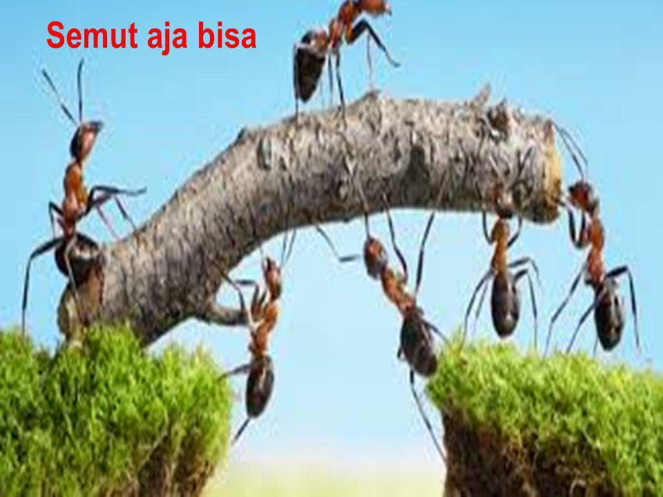 Semut aja bisa