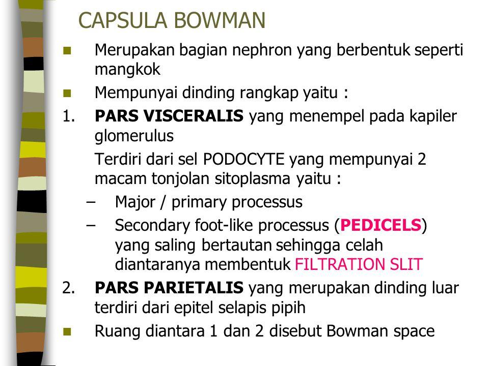 CAPSULA BOWMAN Merupakan bagian nephron yang berbentuk seperti mangkok