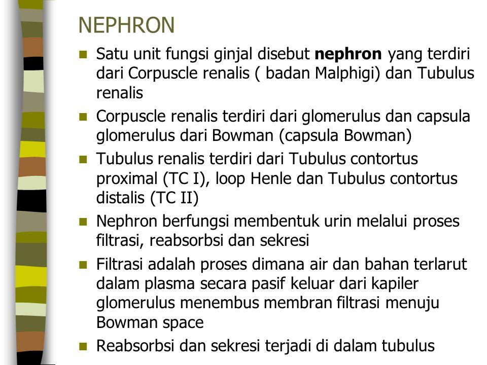 NEPHRON Satu unit fungsi ginjal disebut nephron yang terdiri dari Corpuscle renalis ( badan Malphigi) dan Tubulus renalis.