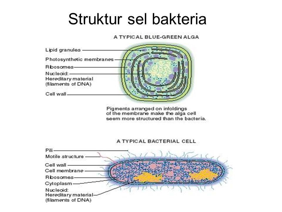 Struktur sel bakteria