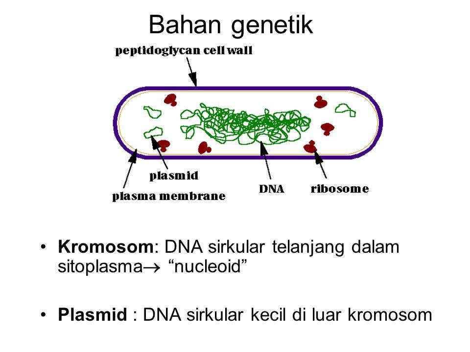 Bahan genetik Kromosom: DNA sirkular telanjang dalam sitoplasma nucleoid Plasmid : DNA sirkular kecil di luar kromosom.