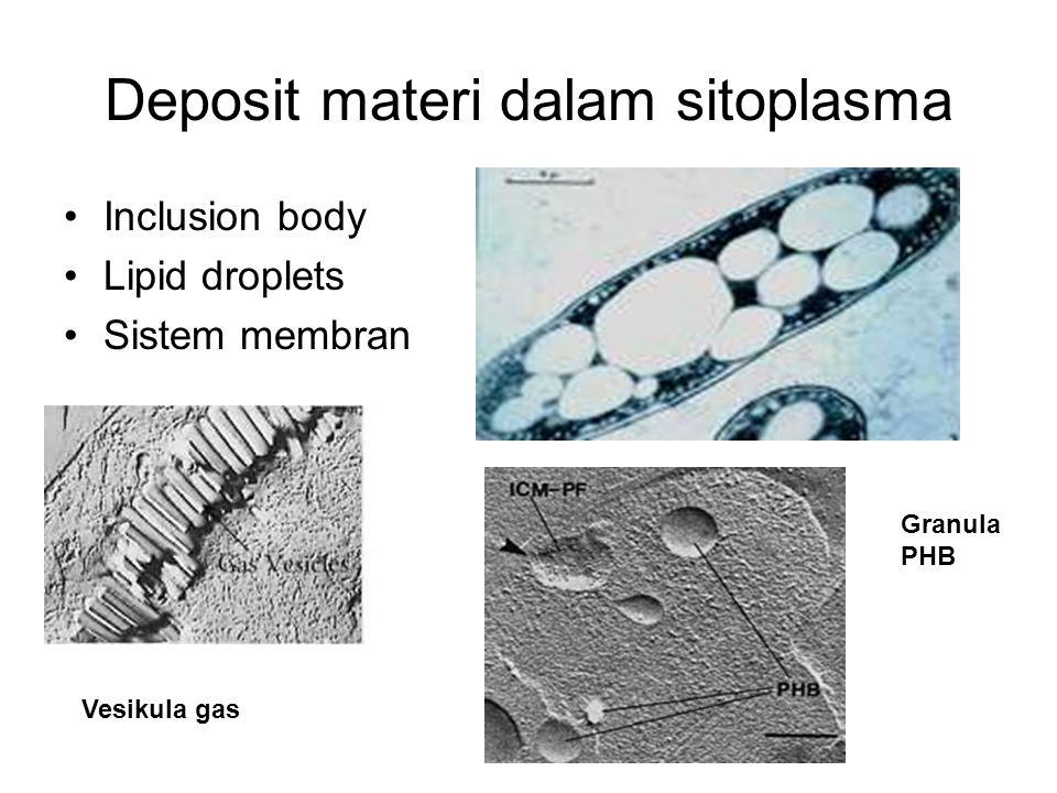 Deposit materi dalam sitoplasma