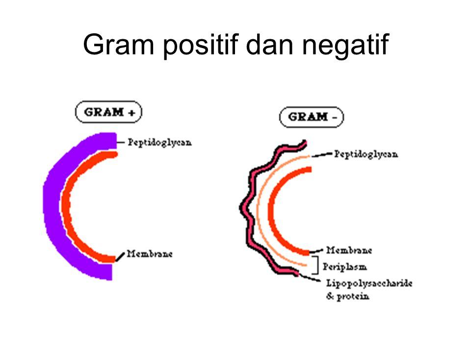 Gram positif dan negatif