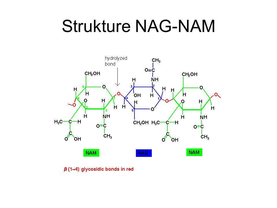 Strukture NAG-NAM