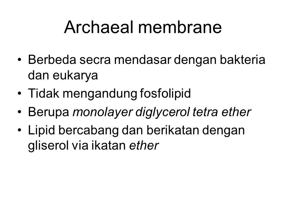 Archaeal membrane Berbeda secra mendasar dengan bakteria dan eukarya