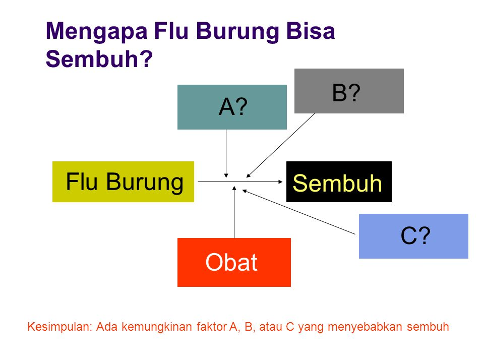 B A Flu Burung Sembuh C Obat Mengapa Flu Burung Bisa Sembuh