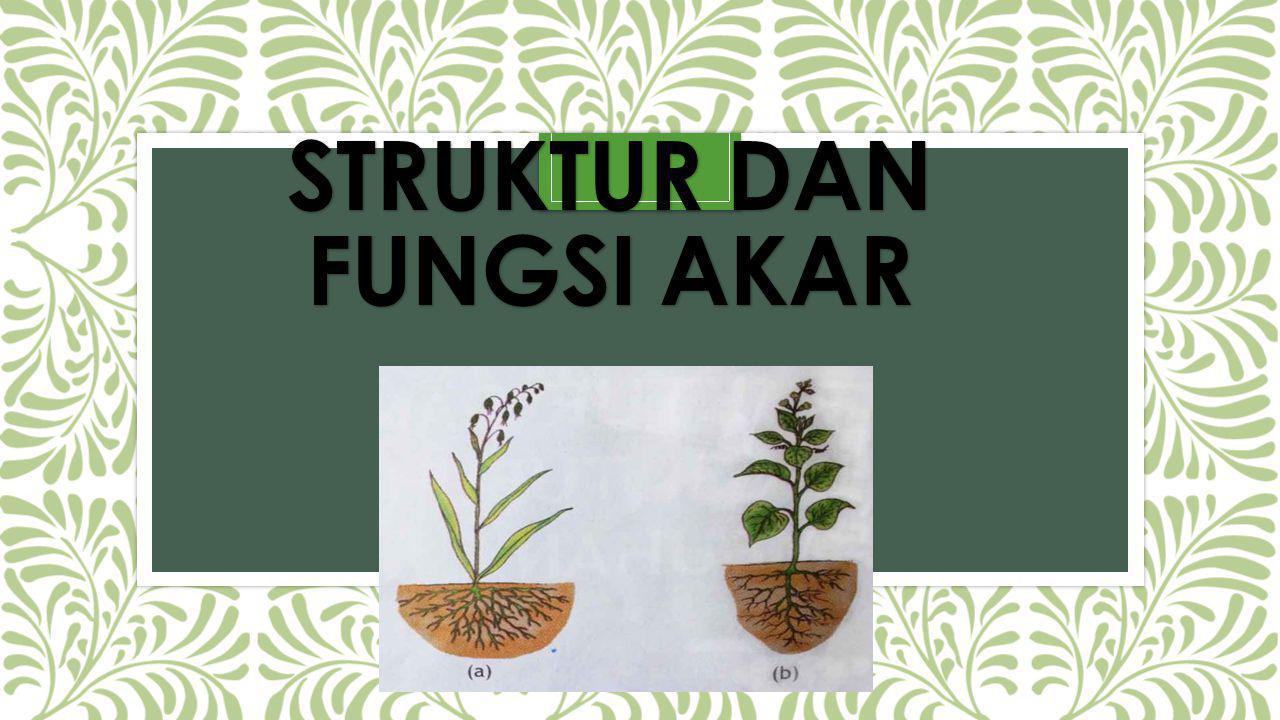 Struktur dan fungsi akar