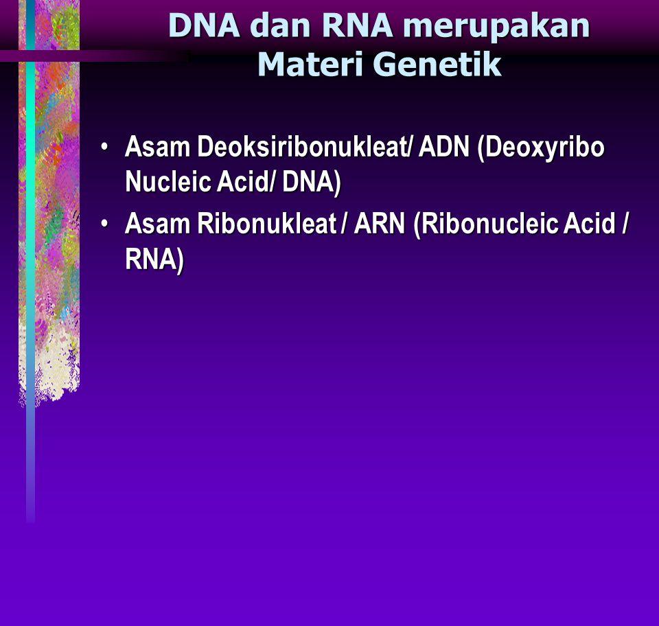 DNA dan RNA merupakan Materi Genetik