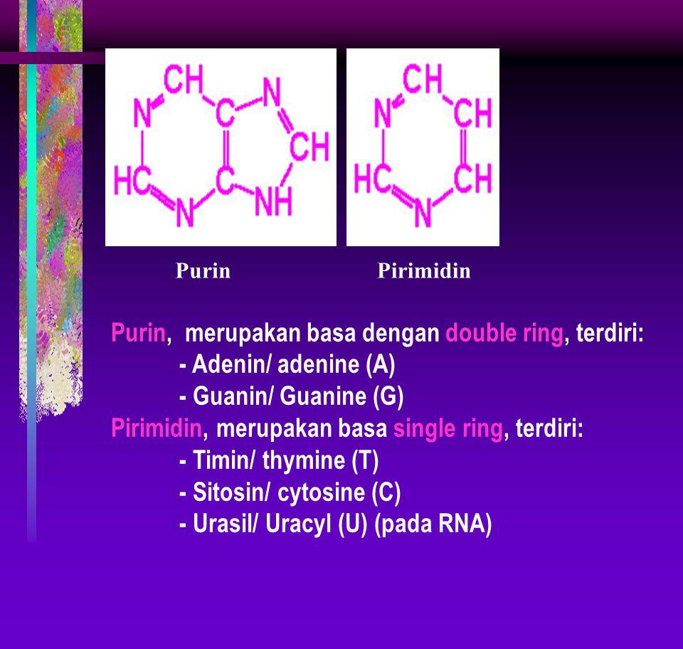 Purin, merupakan basa dengan double ring, terdiri: