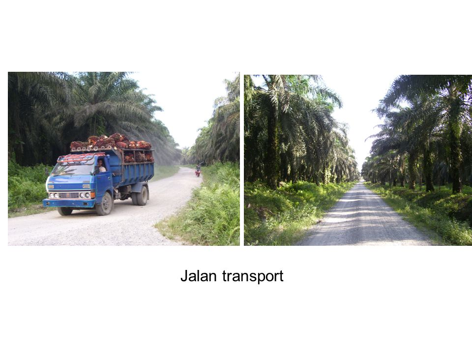 Jalan transport