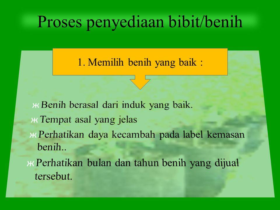 Proses penyediaan bibit/benih