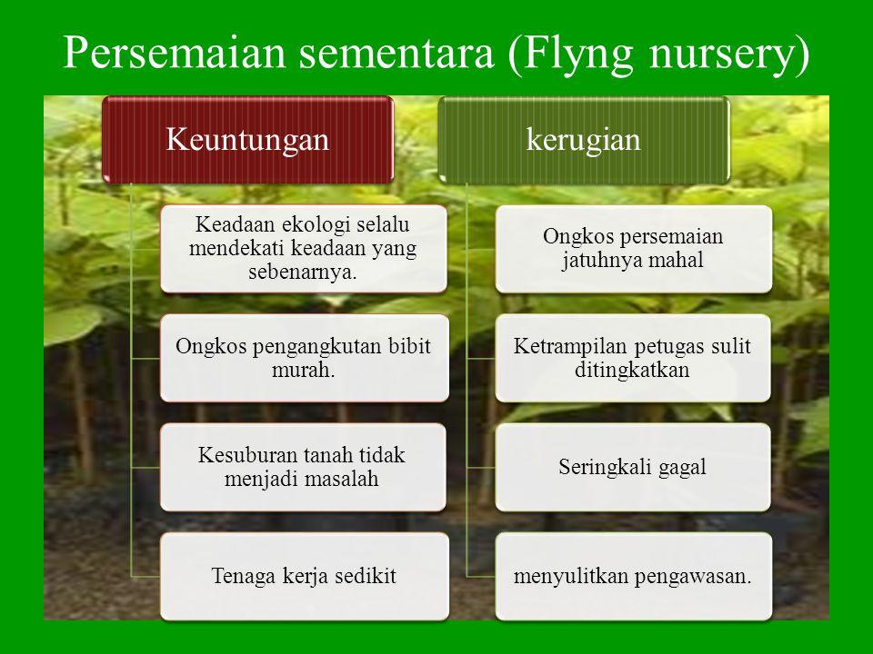 Persemaian sementara (Flyng nursery)