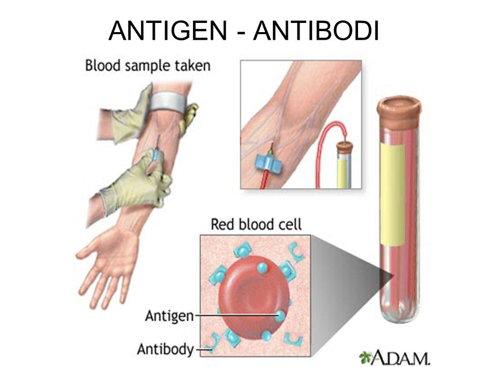 ANTIGEN - ANTIBODI