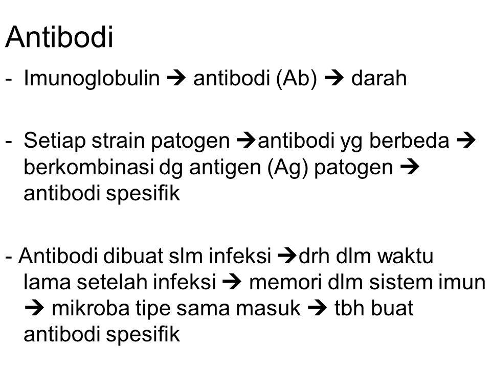 Antibodi Imunoglobulin  antibodi (Ab)  darah