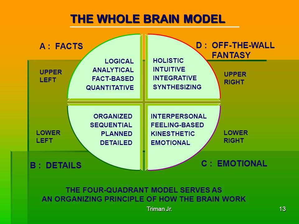 THE WHOLE BRAIN MODEL A : FACTS D : OFF-THE-WALL FANTASY C : EMOTIONAL