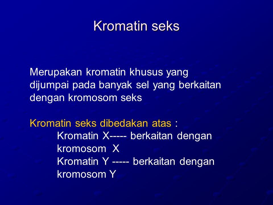Kromatin seks Merupakan kromatin khusus yang dijumpai pada banyak sel yang berkaitan dengan kromosom seks.