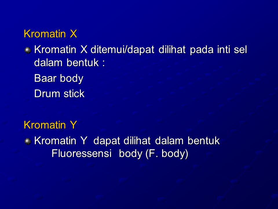 Kromatin X Kromatin X ditemui/dapat dilihat pada inti sel dalam bentuk : Baar body. Drum stick. Kromatin Y.