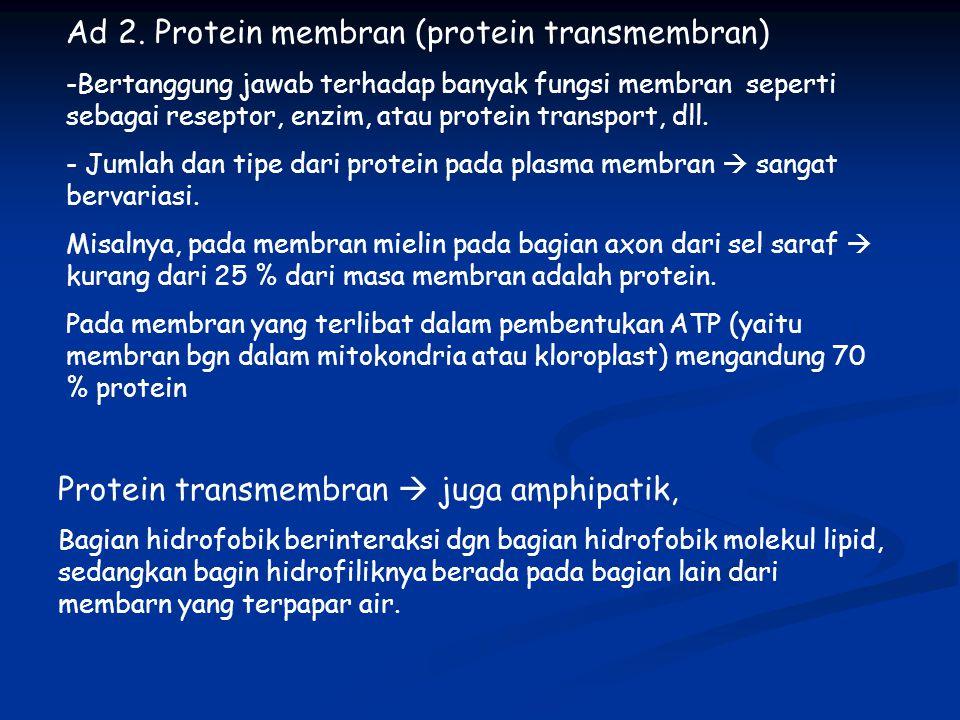 Ad 2. Protein membran (protein transmembran)