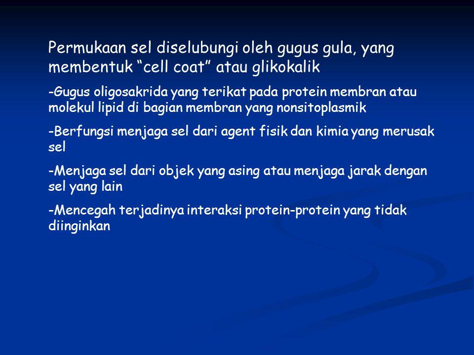 Permukaan sel diselubungi oleh gugus gula, yang membentuk cell coat atau glikokalik