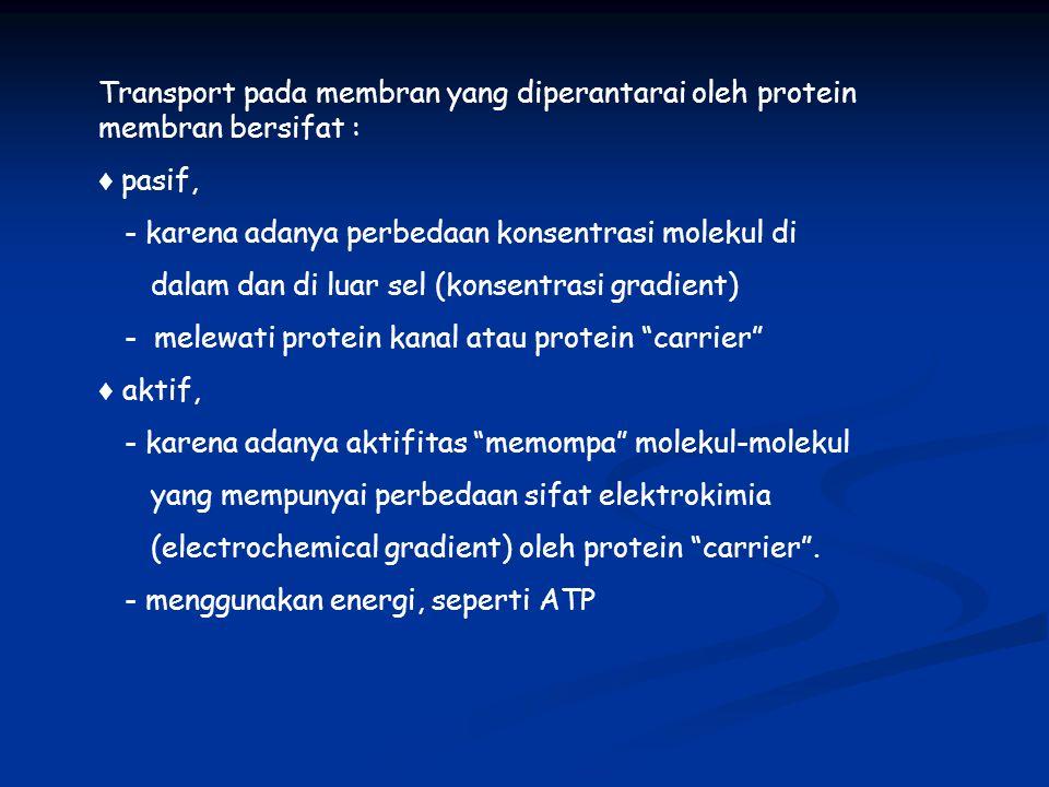 Transport pada membran yang diperantarai oleh protein membran bersifat :