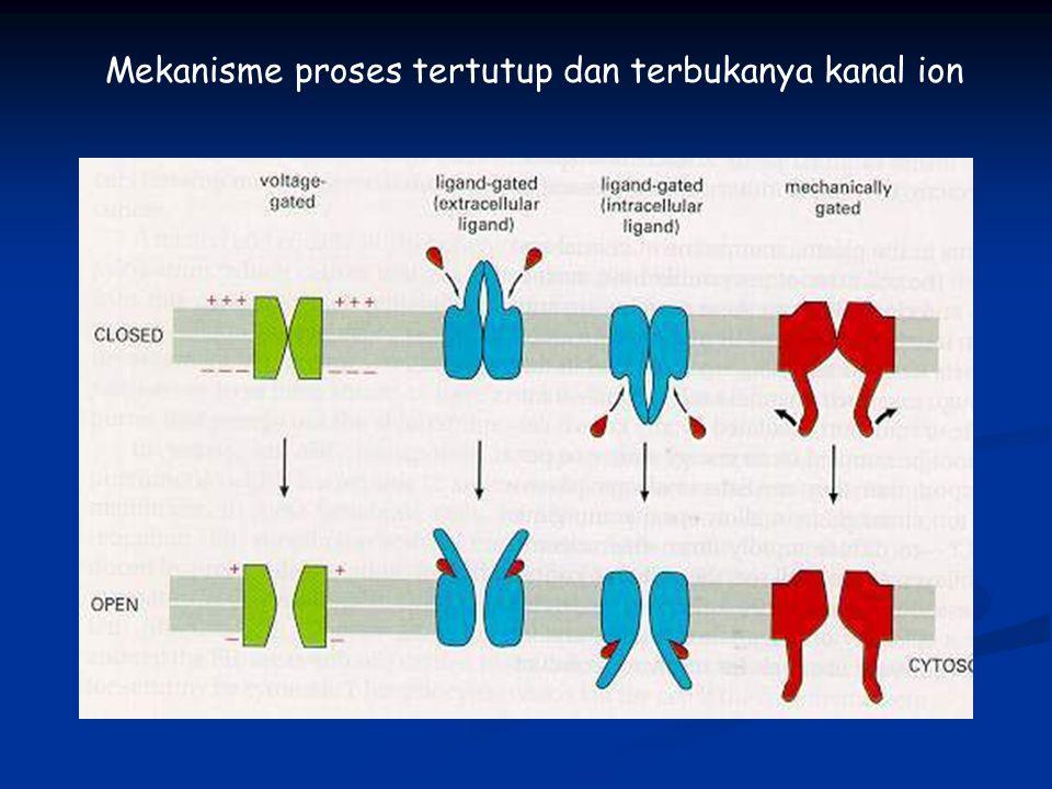 Mekanisme proses tertutup dan terbukanya kanal ion