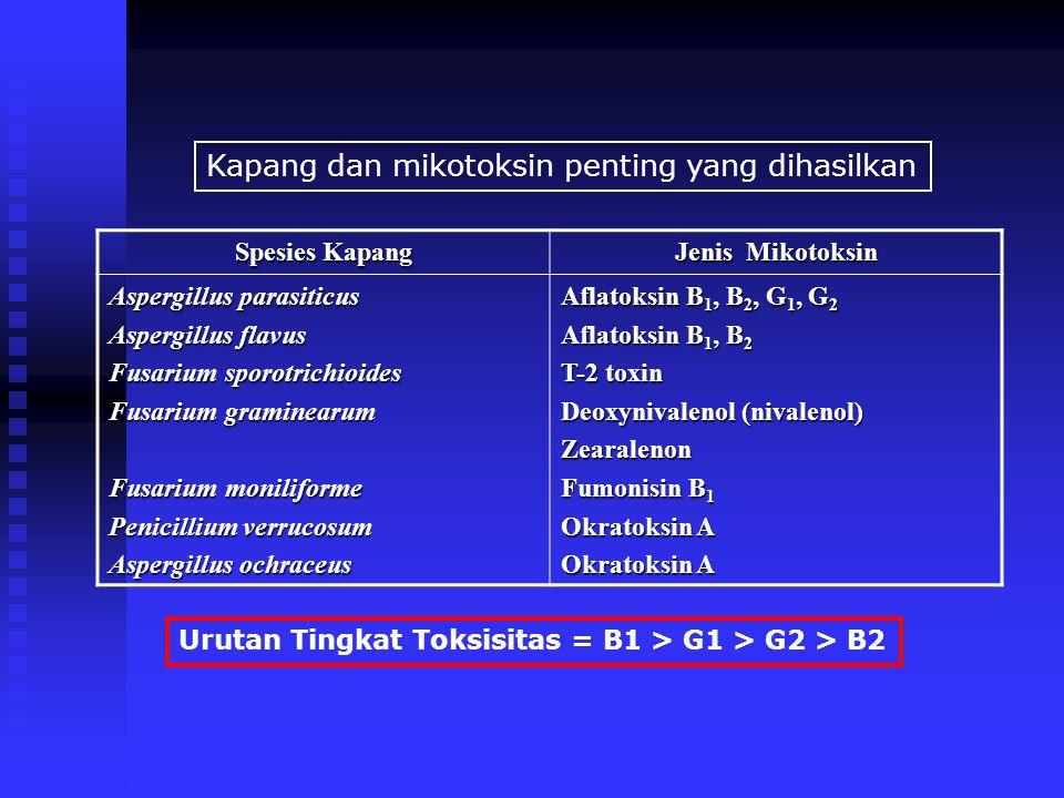 Kapang dan mikotoksin penting yang dihasilkan