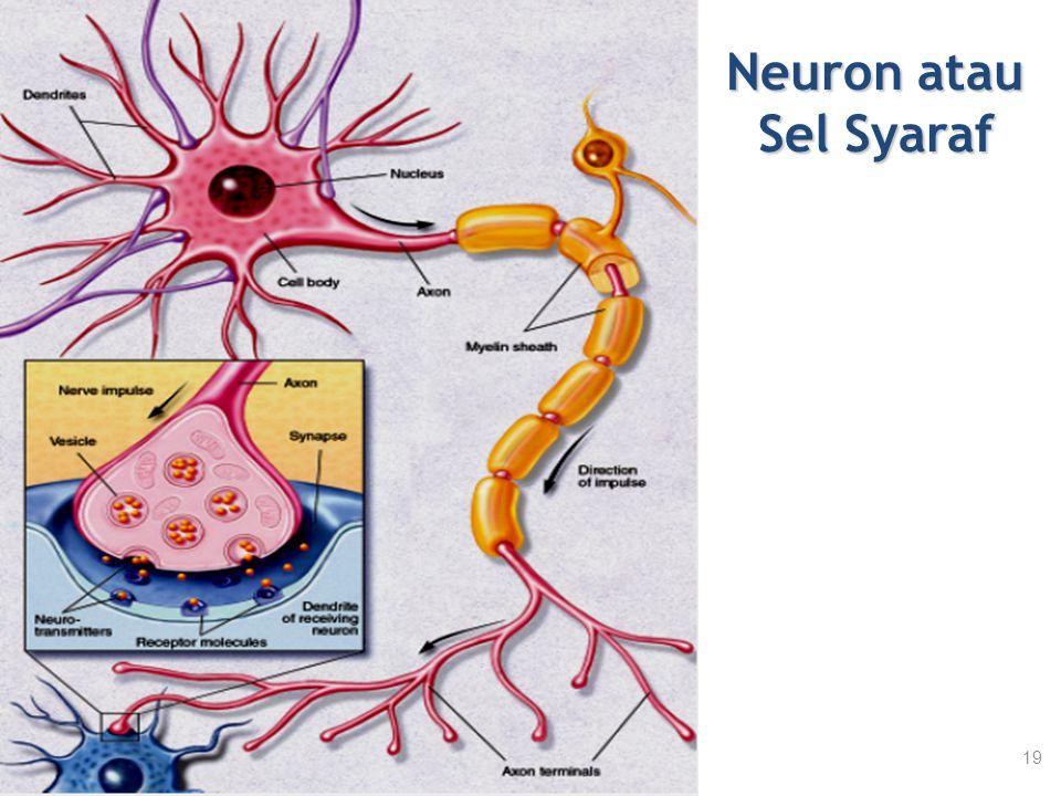 Neuron atau Sel Syaraf