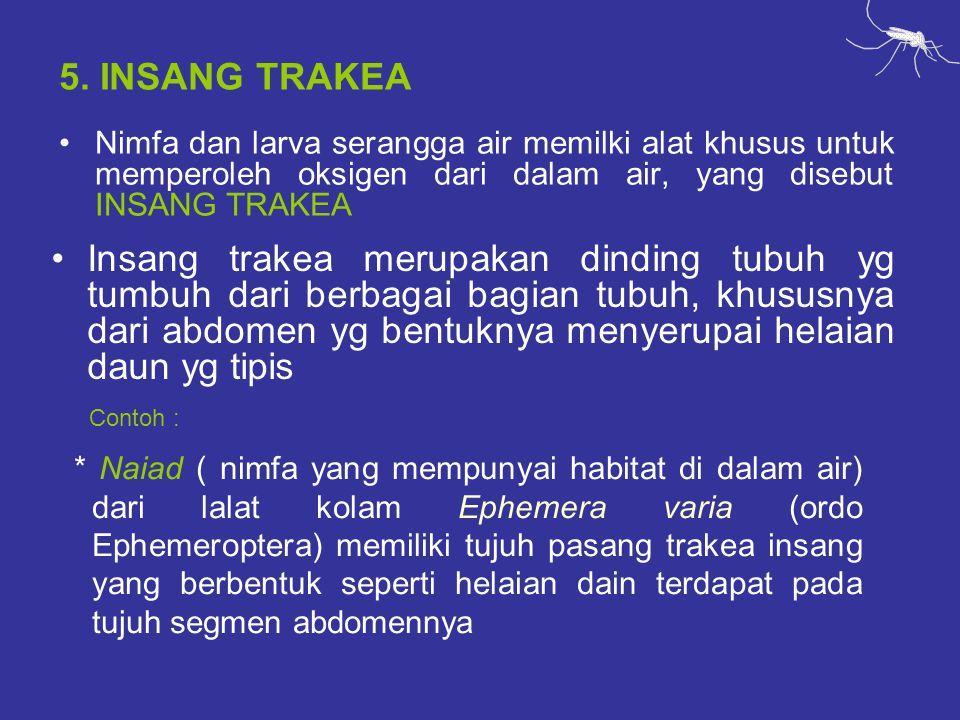 5. INSANG TRAKEA Nimfa dan larva serangga air memilki alat khusus untuk memperoleh oksigen dari dalam air, yang disebut INSANG TRAKEA.