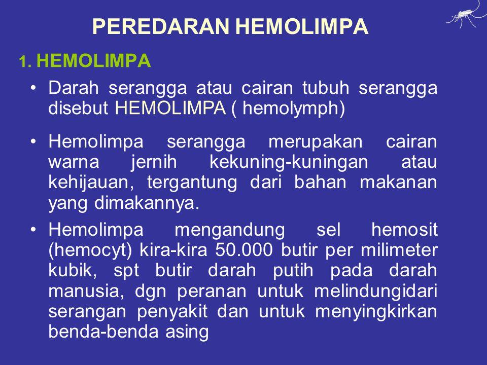 PEREDARAN HEMOLIMPA 1. HEMOLIMPA. Darah serangga atau cairan tubuh serangga disebut HEMOLIMPA ( hemolymph)