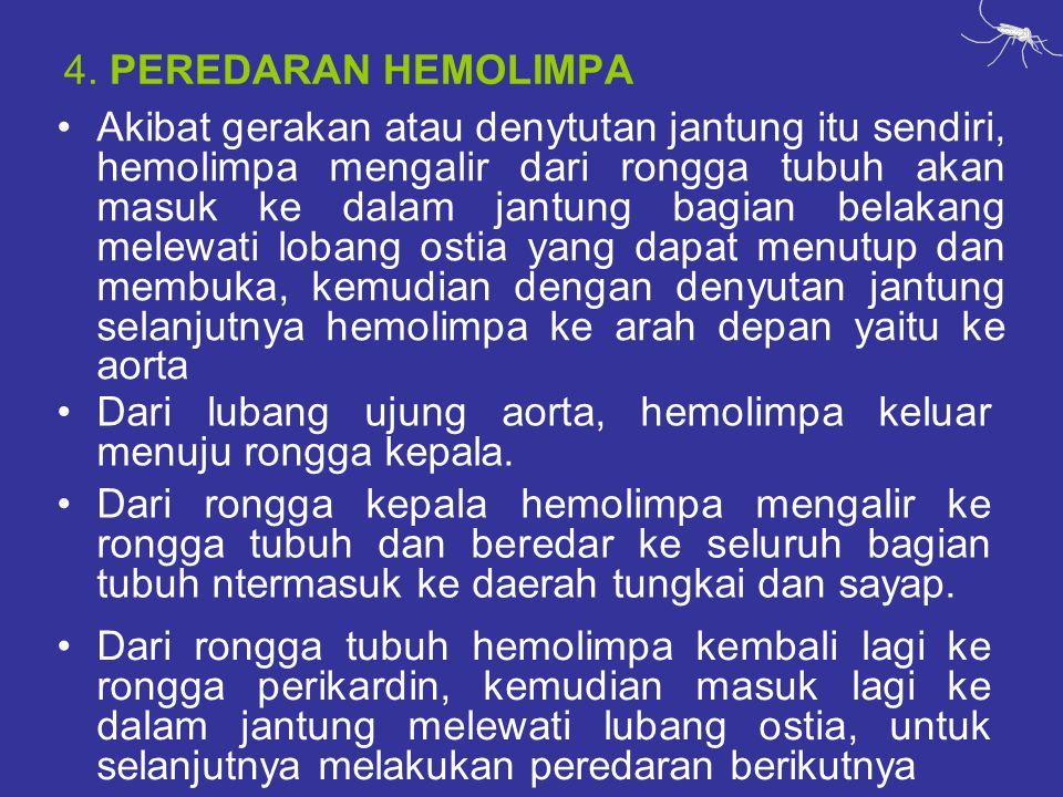 4. PEREDARAN HEMOLIMPA