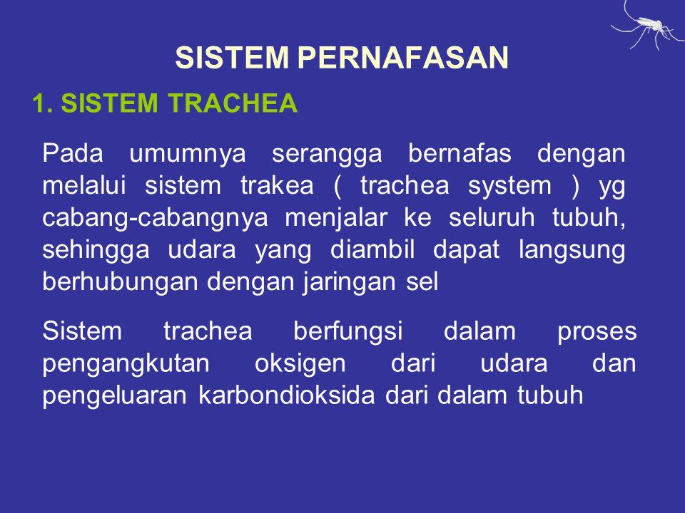 SISTEM PERNAFASAN 1. SISTEM TRACHEA