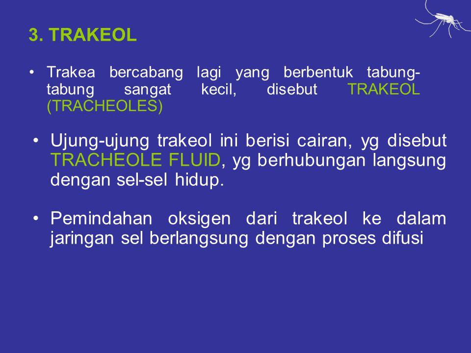 3. TRAKEOL Trakea bercabang lagi yang berbentuk tabung-tabung sangat kecil, disebut TRAKEOL (TRACHEOLES)