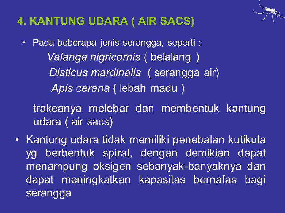 4. KANTUNG UDARA ( AIR SACS)