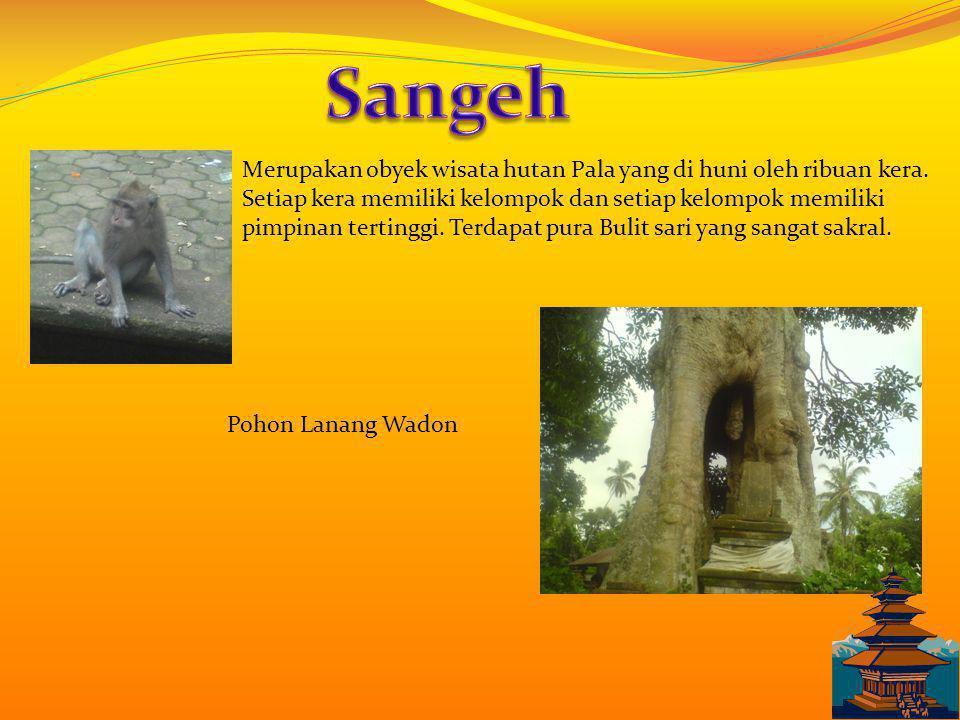 Sangeh Merupakan obyek wisata hutan Pala yang di huni oleh ribuan kera.