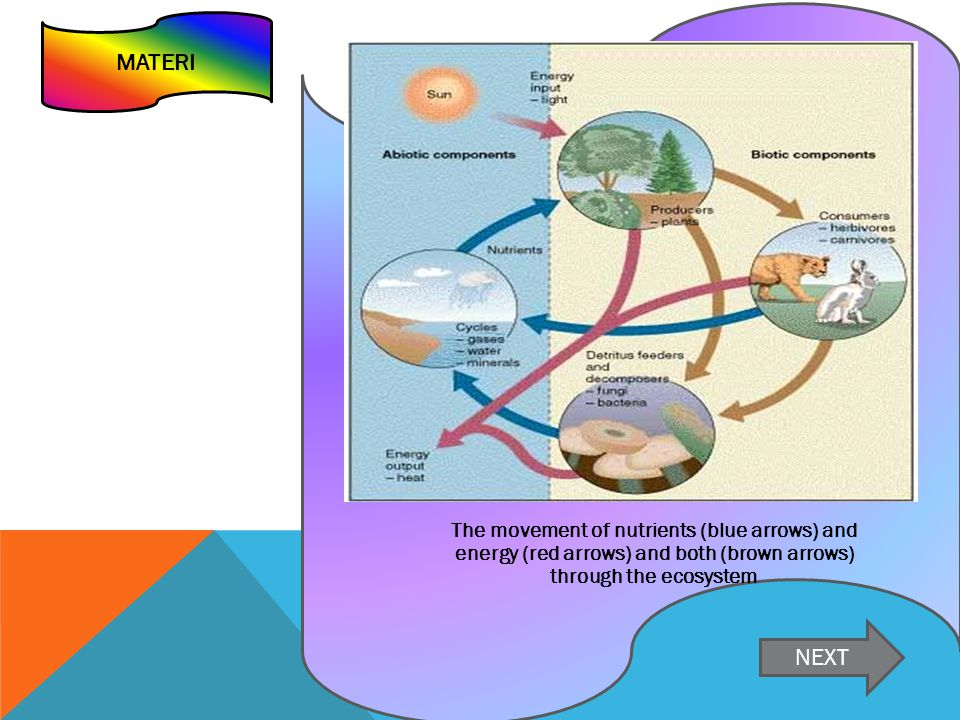 MATERI The movement of nutrients (blue arrows) and energy (red arrows) and both (brown arrows) through the ecosystem.