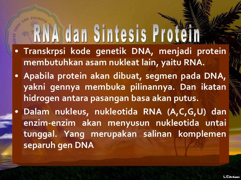 RNA dan Sintesis Protein