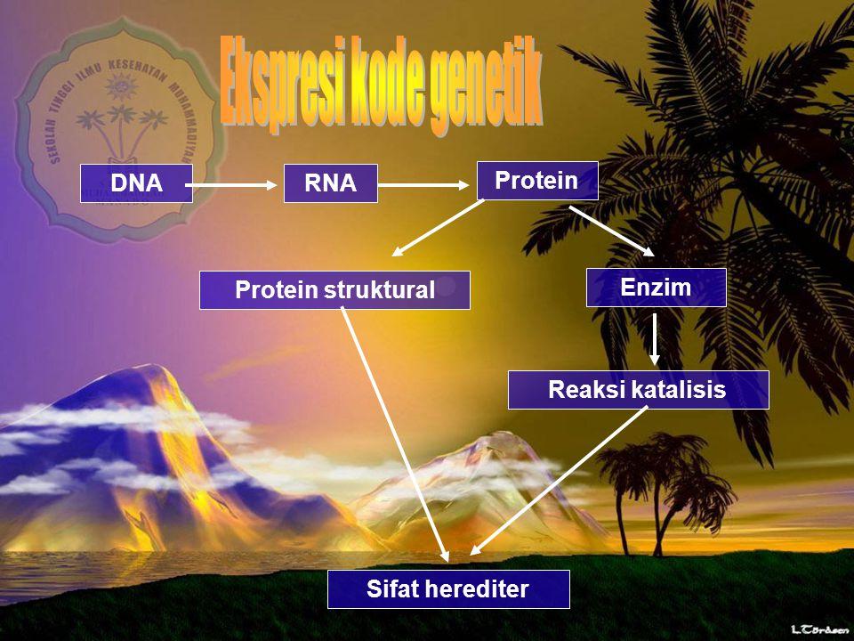 DNA RNA Protein Protein struktural Enzim Reaksi katalisis