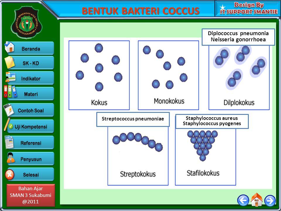 BENTUK BAKTERI COCCUS Diplococcus pneumonia Neisseria gonorrhoea